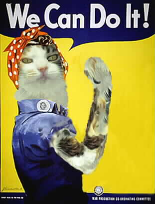Hey, Ashcroft... BOO!    Image features a dressed calico cat in a Rosie the Riveter pose.